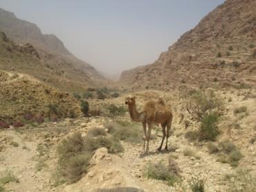 Auf Safari durch Jordanien oder: Die Suche nach dem Anfang