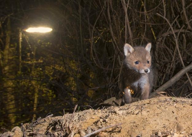 Wo sich Fuchs und Biber gute Nacht sagen