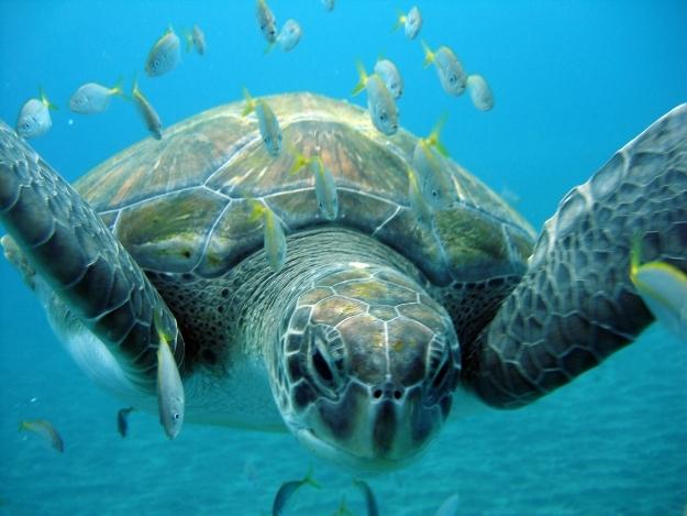 Im Namen der Schildkröte