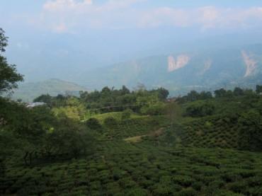 Makaibari: Mein Zuhause auf der indischen Teeplantage