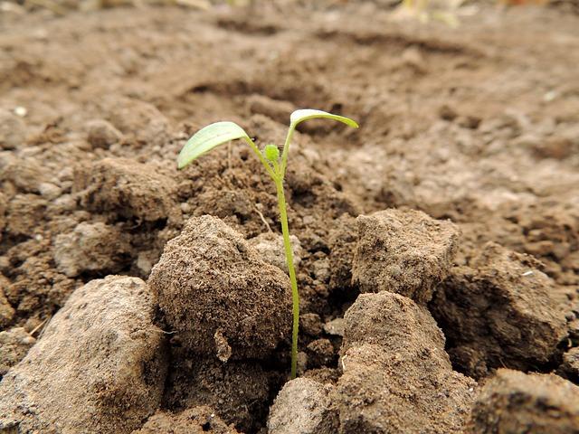Vom Samen bis zur Ernte: Erste Schritte