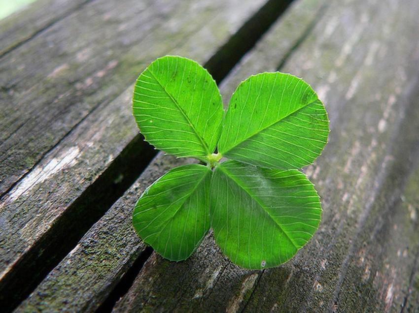 Nadine sucht das Glück: Weißt du, was Glück ist?