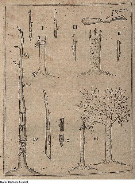 Vom Samen bis zur Ernte: Pflanzenveredelung