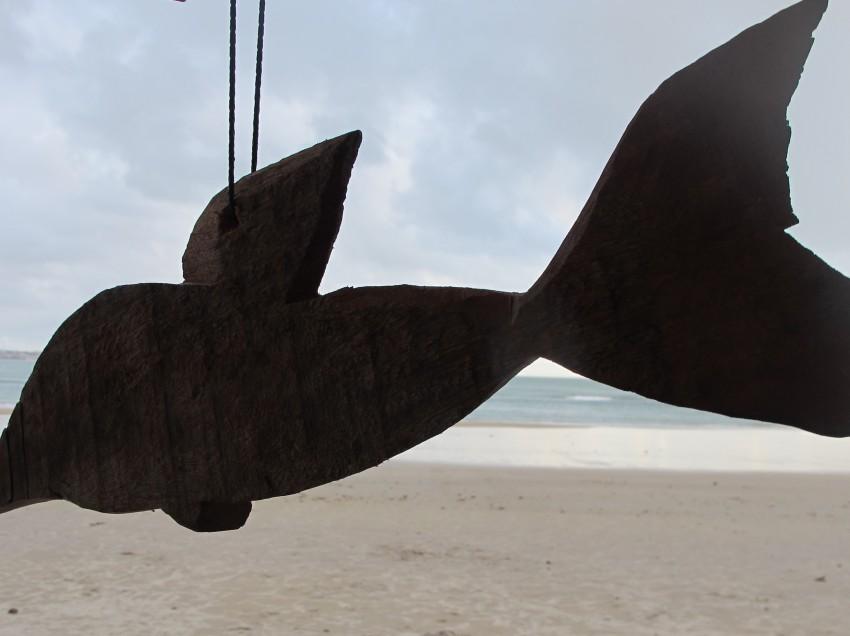 Von einer, die auszog, um mit Delphinen zu schwimmen