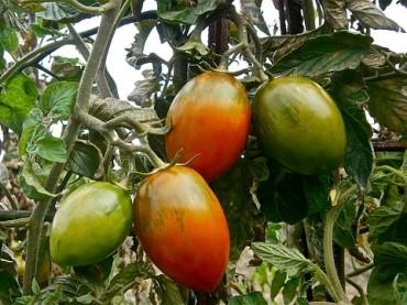 Vom Samen bis zur Ernte: Aussaat