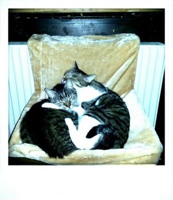 Nadine sucht das Glück: Das Glück und die Katzen