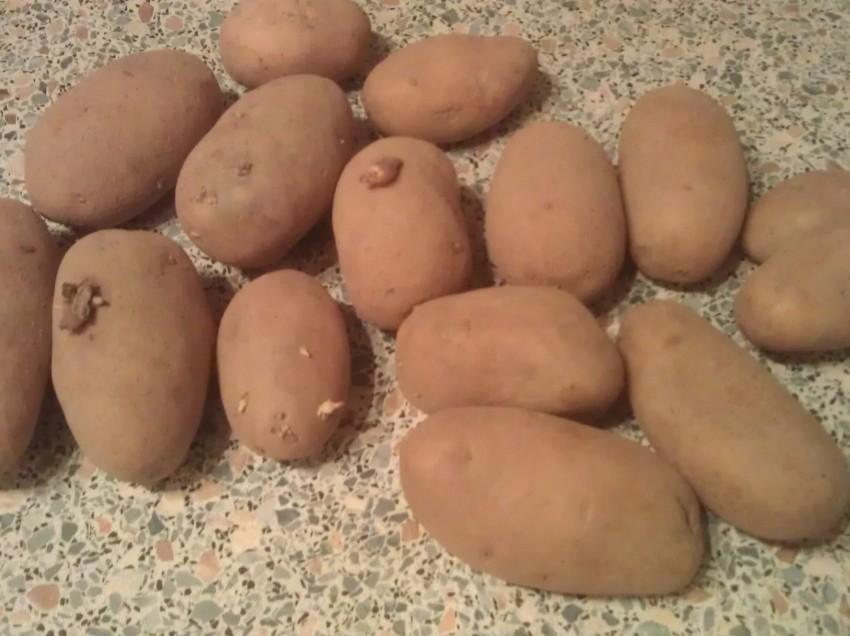 Vom Samen bis zur Ernte: Potatobox, erster Teil
