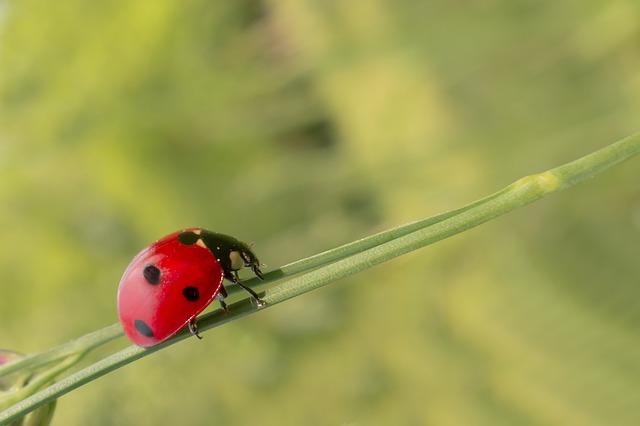 biohelp – Natürliche Schädlingsbekämpfung