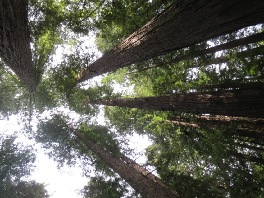 Eine (fast) vegane Reise durch Nord-Kalifornien, Teil 3