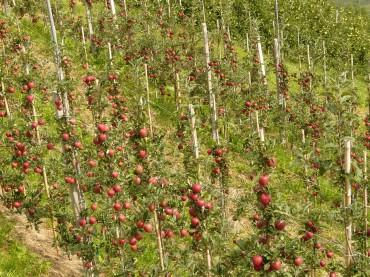 Vom Samen bis zur Ernte: Saatgut und Zucht