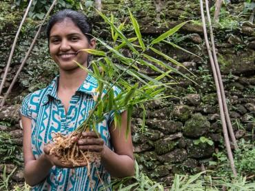 Kritischer Konsum: Auf den Spuren des Fairtrade-Ingwers
