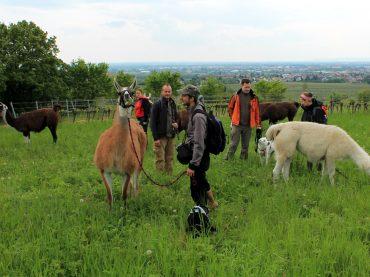 Juli/August 2016: Vegane Events in Wien und Niederösterreich