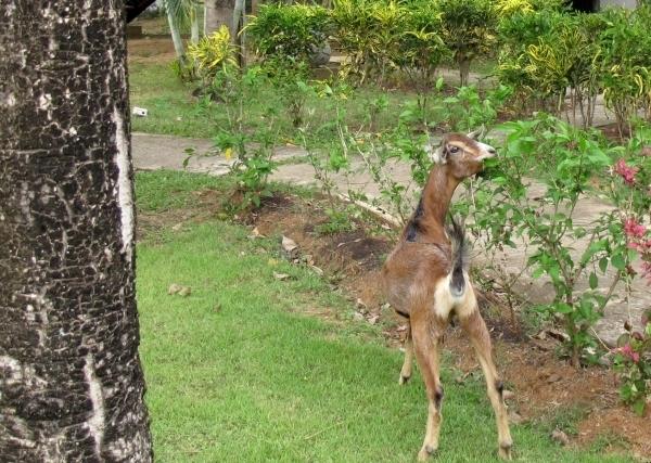 Ein ruhiges, friedliches Zusammenleben übrigens auch mit den Tieren: Ob Ziegen oder Katzen, ... sie sind überall. Foto: Doris