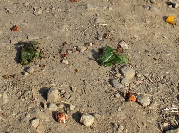 Betelnüsse liegen überall - sonst ist das Land nicht so schmutzig wie gedacht. Foto: Doris