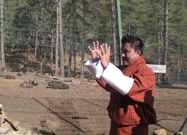 Chencho im Einsatz - beim Erklären des Nationaltiers Takin. Foto: Doris