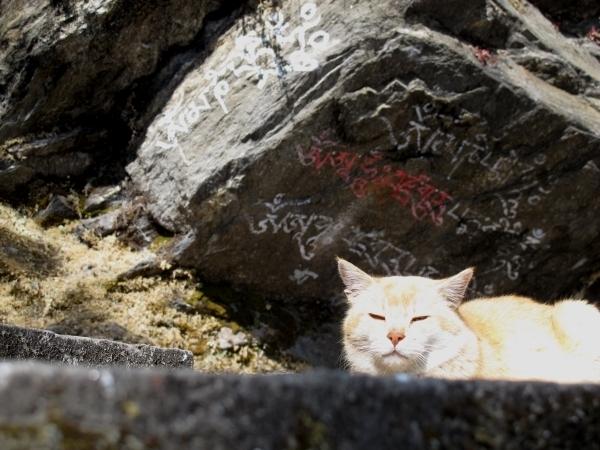 Sie hat die Ruhe weg - im Chacri Meditationszentrum kein Wunder. Foto: Doris