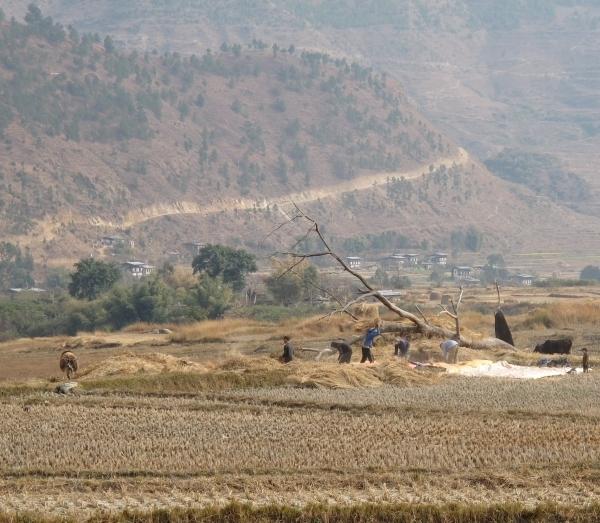 Hier werden Reisfelder bestellt. Foto: Doris