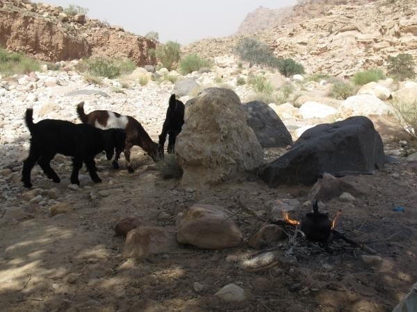 Zu Gast nicht bei Ziegen sondern bei Beduinen auf einen Tee. Foto: Doris