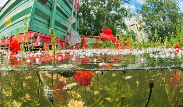 Ein Feld beim Alberner Hafen (11. Bezirk) im Hochwasser. Am Feldrand blühende Mohnblumen waren zum Teil komplett unter Wasser, manche ragten noch durch die Oberfläche. Foto: © Wiener Wildnis/T. Haider