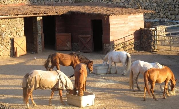 Acht Pferde - ebenfalls aufgelesen - werden für die Therapie verwendet. Foto: Doris