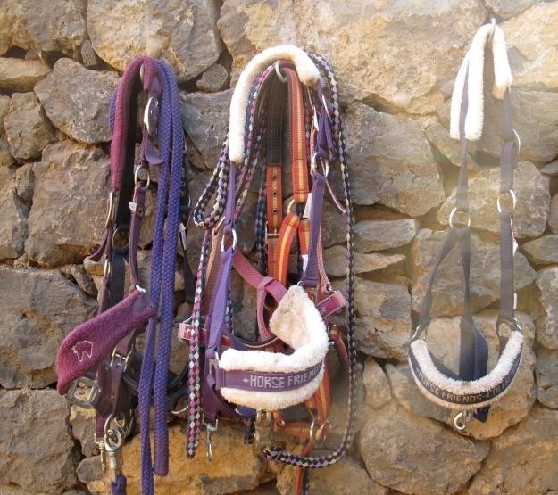 Die Pferde werden als Partner behandelt: Pferdeflüsterer lässt grüßen. Foto: Doris