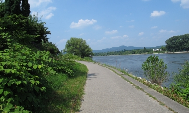 Wer mit dem Bönnsch in der Hand am Rhein entlang radelt... Foto: Doris