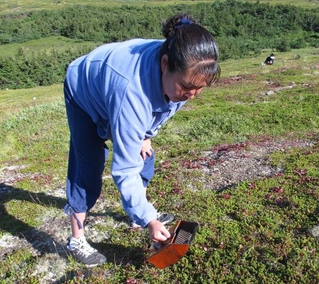 Ein spezieller Apparat macht das Beeren-Pflücken einfacher. Foto: Doris