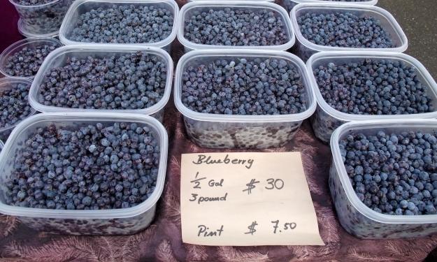 In Alaska kommt man an Blueberries kaum vorbei. Foto: Doris