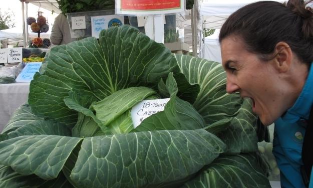 Riesen-Cabbage: Wobei, mit 18 Pfund ist er noch erträglich klein. Foto: Doris