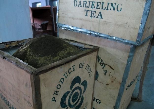 Makaibari Teeplantage, die erste, die auf Bioproduktion gesetzt hat. Foto: Doris