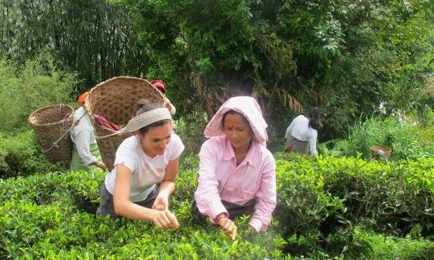 Beim Besuch der Teeplantage darf man auch mal mitpflücken. Foto: Doris