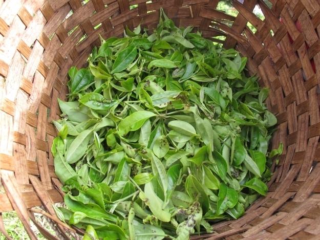 Hier lebt man vom Tee und vom Tourismus. Foto: Doris