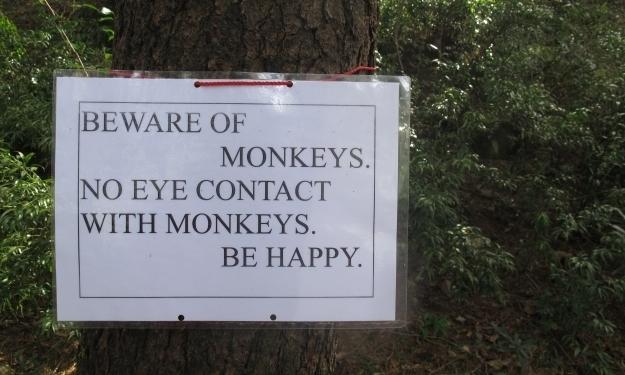 Achtung, Affengefahr! Foto: Doris