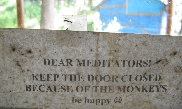 Monkey, monkeys, nichts als monkeys... Foto: Doris