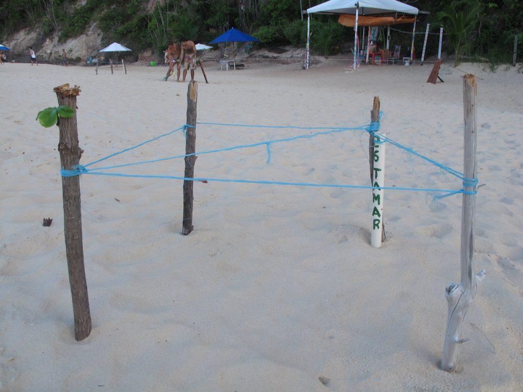 In diesen geschützten Bereichen liegen die Nester der Schildkröten vergraben. Foto: Doris